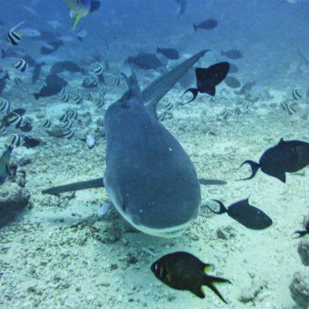 Beqa Island, ฟิจิ: photo6.jpg