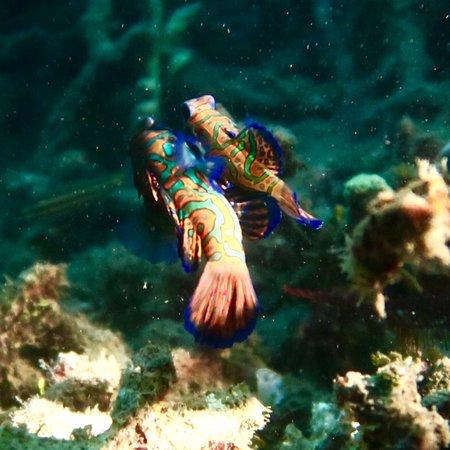 Kungkungan Bay Resort: photo4.jpg