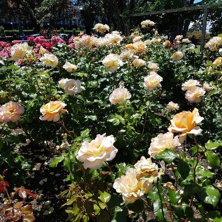 Parnell Rose Gardens : 20171203_143309_large.jpg
