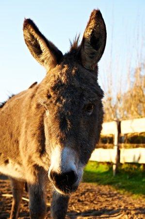 Ahlefeld, Γερμανία: Unsere Esel