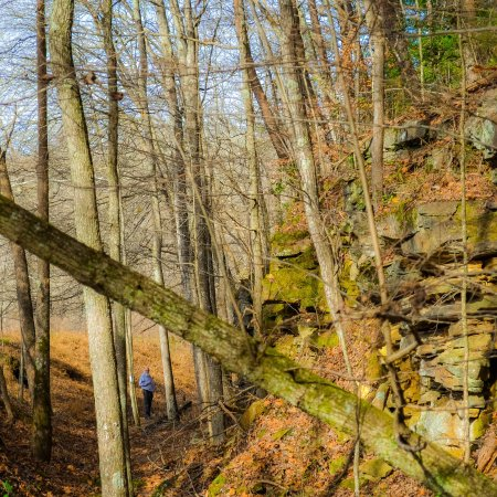 Grundy Forest Natural Area: photo1.jpg