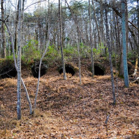 Grundy Forest Natural Area: photo3.jpg