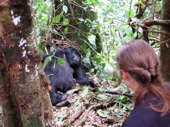 Bwindi Impenetrable National Park: Zo dichtbij