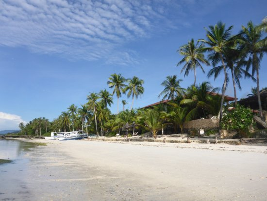 Lunch And Dinner Review Of Island View Beachfront Resort Anda