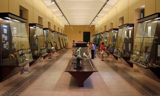 Museo del IES Cabrera Pinto