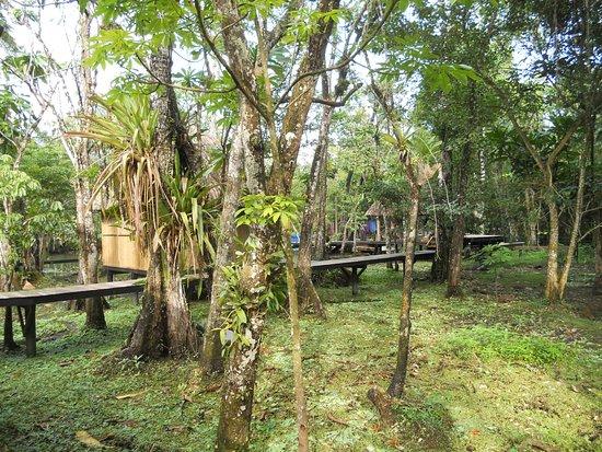 Fronteras, Guatemala: Siamo in mezzo allle mangrovie