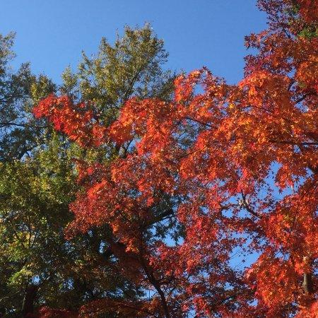 Inokashira Onshi Park: photo0.jpg