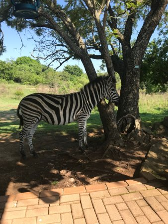 Tomjachu Bush Retreat: My breakfast time friendly visitor