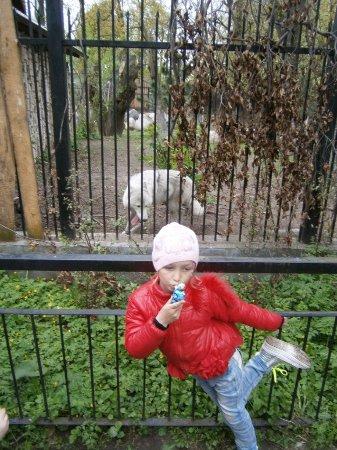 Калининградский зоопарк: Танцы с волками
