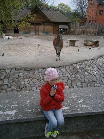 Калининградский зоопарк: Не скучаем