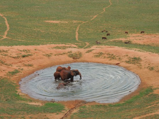 Voi Safari Lodge: panorama