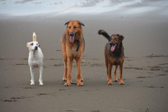Playa Matapalo, Costa Rica: die 3 lieben Aufpasser
