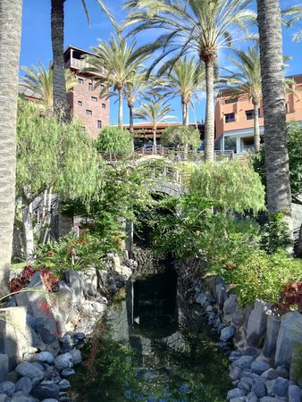 Img 20171202 100114 picture of melia jardines for Jardin del teide