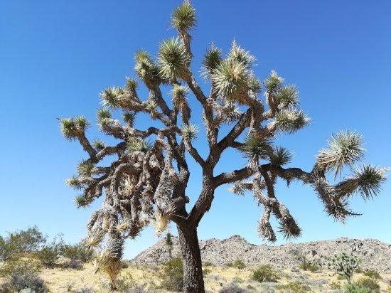 Twentynine Palms, CA: Namensgeber des NP