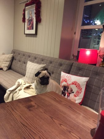 Albury, UK: Poppy, the resident pug