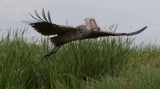Semuliki National Park, أوغندا: photo0.jpg