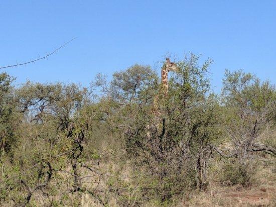 Madikwe Game Reserve, South Africa: Buffalo Ridge Lodge