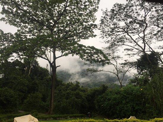 Sanctuary Gorilla Forest Camp: photo1.jpg
