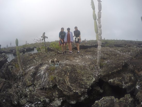 Puerto Villamil, Ecuador: PIQUEROS PATAS AZULES