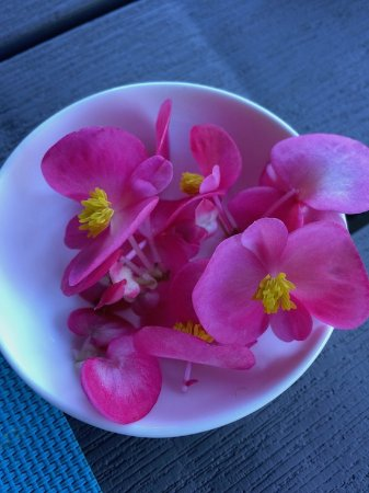 Hotel Quelitales : edible flowers