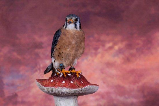 Cumbernauld, UK: One of the birds