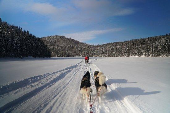 Entre chien et loup: expédition en traineaux