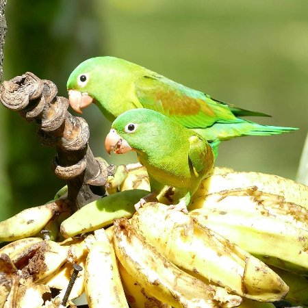 Boca Tapada, Коста-Рика: IMG_20171130_190651_517_large.jpg