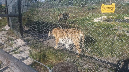 Stanford, South Africa: Panthera Africa - Big Cat Sanctuary