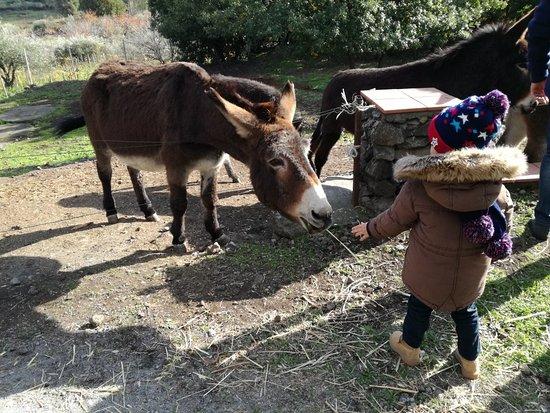 Piedimonte Etneo, Италия: IMG_20171203_124959_large.jpg