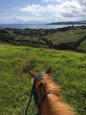 Isla Waiheke, Nueva Zelanda: Leroy was a great boy