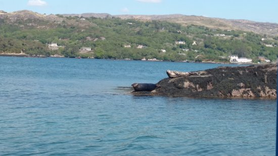 Garnish Island : Our Captain was decidedly less enthusiastic about the seals than we were, but it was still lovel