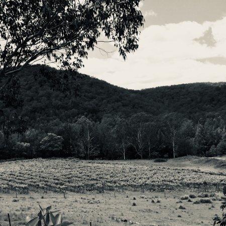 Cedar Creek 이미지