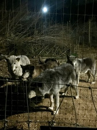 Wolf Sanctuary of PA : several different packs to learn about and see