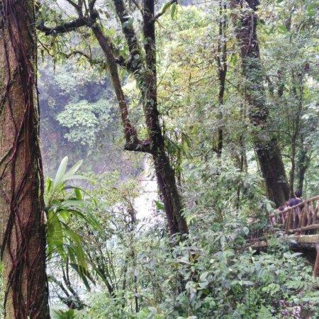 Tenorio Volcano National Park, Costa Rica: photo9.jpg