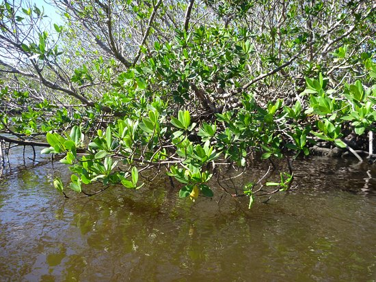 Adventure Kayaking : Mangroves