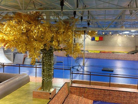 Chandler, AZ: Gymnastic floor