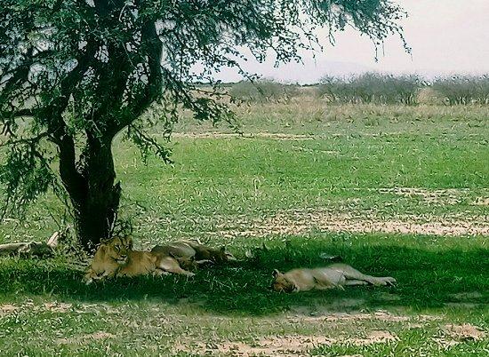 Tarangire National Park, Tanzania: P71202-143101(1)(1)_large.jpg