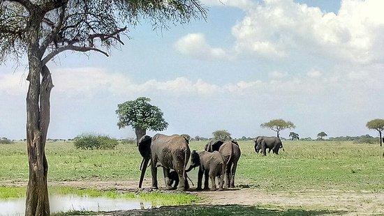Tarangire National Park, Tanzania: P71203-135826_large.jpg
