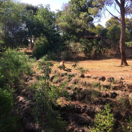 Bloemfontein Zoo