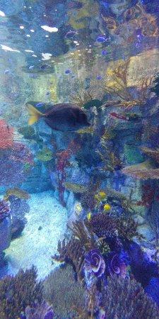 Birch Aquarium at Scripps: 20171203_112606_Burst01_large.jpg