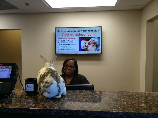 "Locust Grove, GA: Very nice General Manager, Michelle Lassiter; chats with my rabbit ""Narvik"" during checkout...."