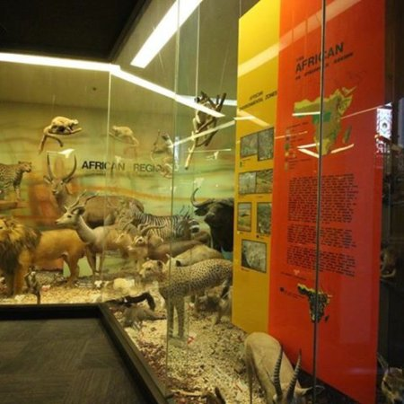 Musée d'Australie-Méridionale : South Australian Museum