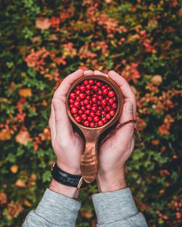 Break Sokos Hotel Levi: Autumn vibes - pick berries by yourself.