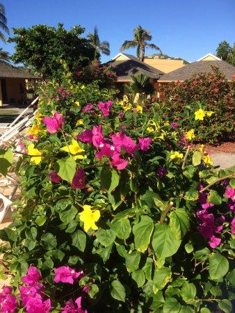 Sugar Bay Club: gardens