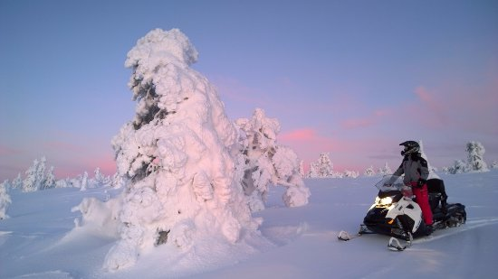 Oy Kinos Safaris - Day Tours: Winterwonderland and a snow packed tree