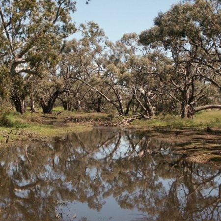 Donald, Αυστραλία: Richardson River