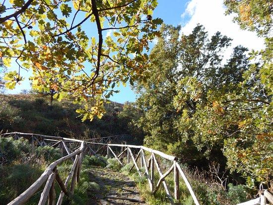 Moio Alcantara, Italie : Sentiero con staccionata