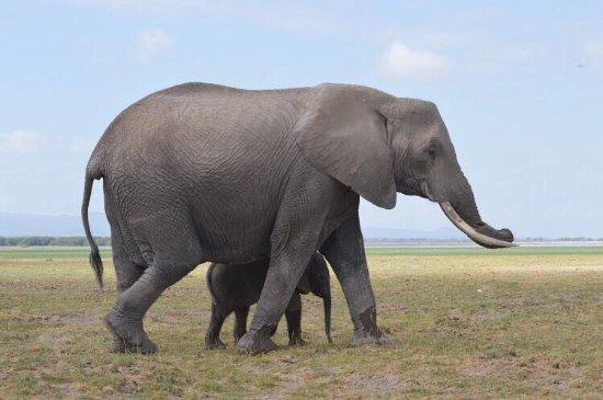 Amboseli National Park, Kenia: photo6.jpg