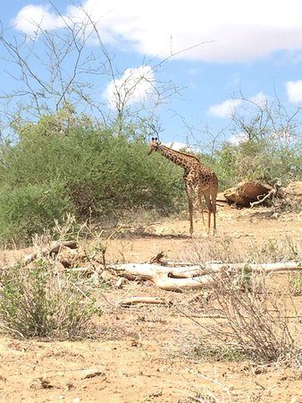 Amboseli National Park, Kenia: photo7.jpg