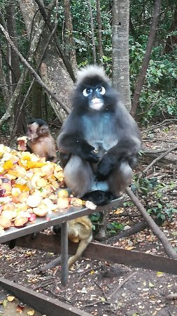 Monkeyland Primate Sanctuary: IMG_20171204_125258_large.jpg